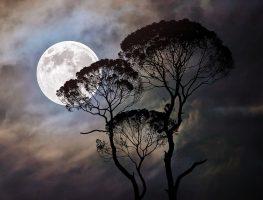 Free sheet music for Au Claire De La Lune